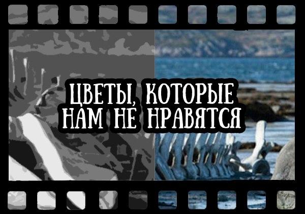 состояние российского кино